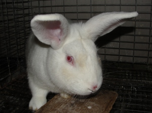 Rabbit nose healed
