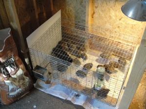 quail new cage