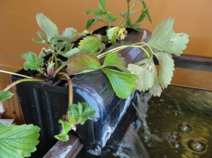 aquaponics aquarium filter life hack 2