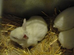 bunny update 1