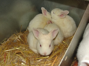 baby rabbit update 2