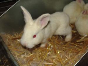 baby rabbit update 3