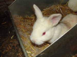 baby rabbit update 4