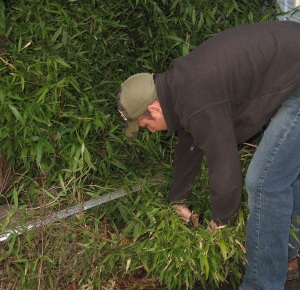 cutting down bamboo for rabbit feed