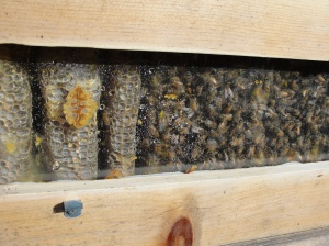 Moisture in the bee hive during winter