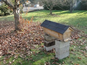 New location for bee hive