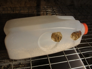 quail feeder milk jug prototype