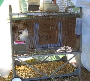 bunny hutch from scrap materials
