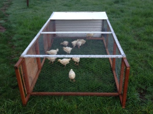 pastured poultry tractor 2