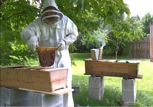craig hive split 1