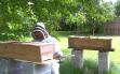 craig hive split 2