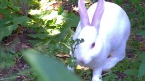 rabbit in new area