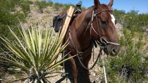 Yucca plant and my horse Romy