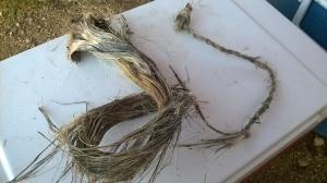 Yucca fibers and cordage
