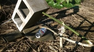 Figure 4 Deadfall Trap